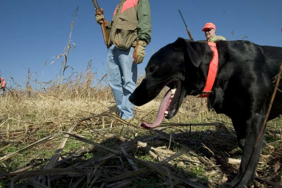 Hunting dogs during the filming outdoor show at Greystone Castle hunting lodge in Mingus, Texas in 2005. Photo: Sporting News Archive, Sporting News Via Getty Images