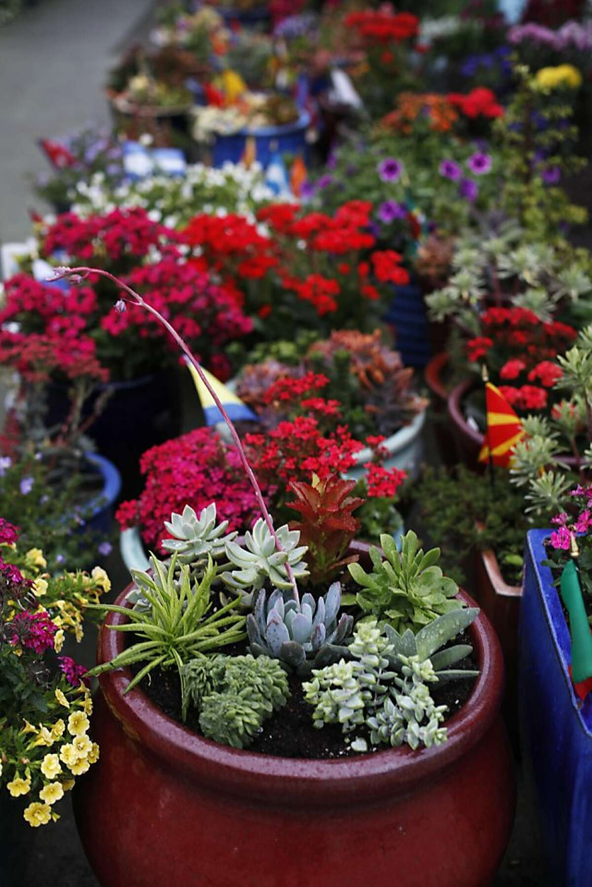 Potted plants, each containing a country's flag, are seen on Barcelona Street on November 19, 2013 in the Anza Vista neighborhood of San Francisco, Calif.