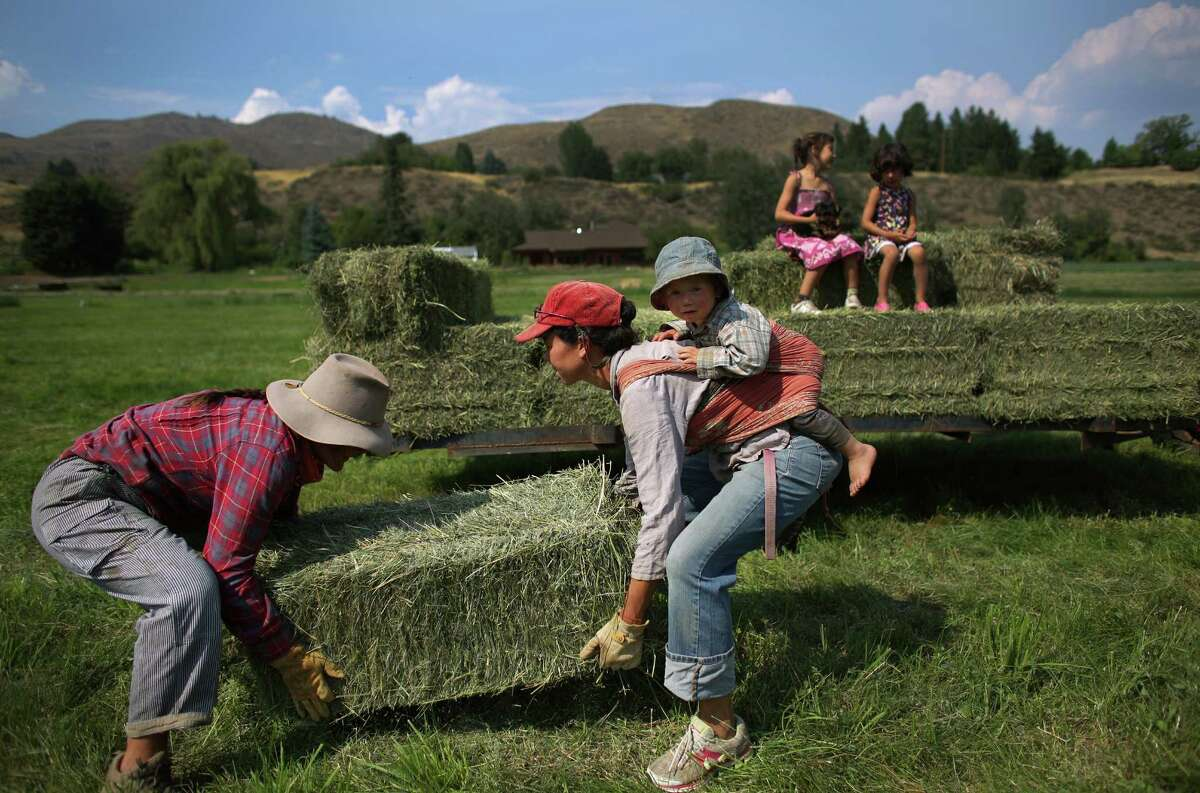 Farmers Leslie Pilcher, left, and Anne LeFevre buck bales of hay onto a wagon at the Channing Family Farm in the Twisp River Valley. The mule-powered, organic farm produces certified organic garlic and potatoes. The hay they grow is used to feed the animals that plow and help work the land.