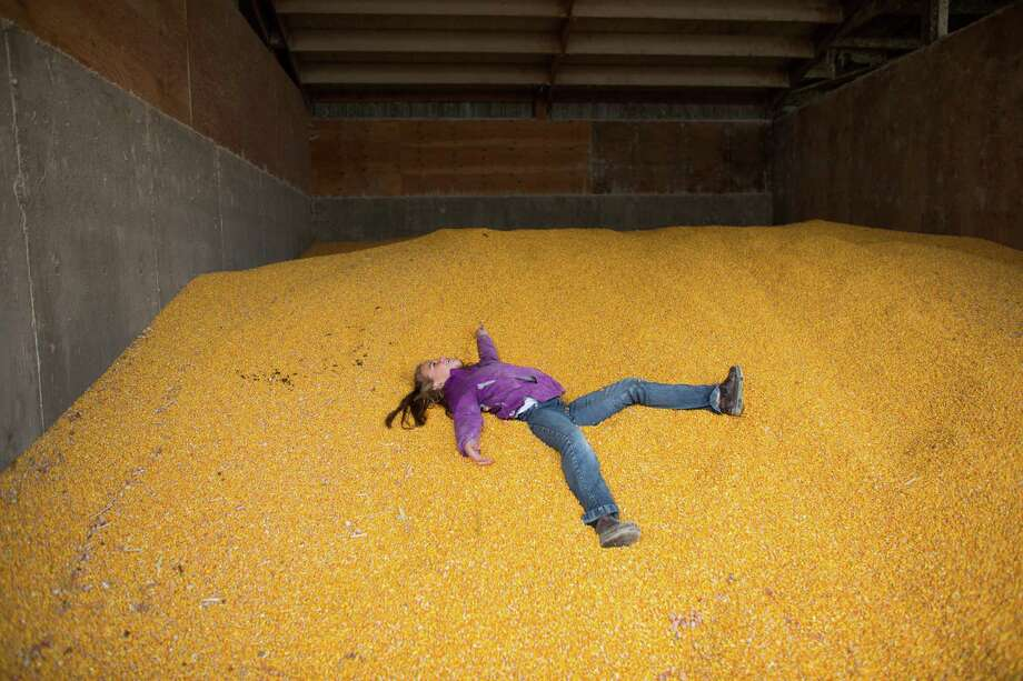 Tabby DeJong, 8, has fun in a large bin of corn used as feed for the cows on the DeJong family's dairy, Eaglemill Farms. The third-generation farm is part of a Darigold farmer-owned cooperative. The price for corn feed has skyrocketed in recent years as many corn farmers have switched their crops to corn produced for ethanol, said farmer Jon DeJong. That has made an already tough livelihood even more difficult. Photo: JOSHUA TRUJILLO, SEATTLEPI.COM / SEATTLEPI.COM