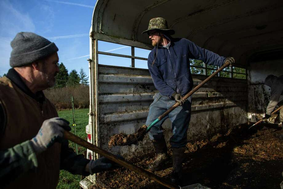 "Farmers Jerry Stokesberry and Alan ""Moe"" Rochester clean out a trailer to transport organic turkeys at the Stokesberry Sustainable Farm near Olympia, Wash. ""Farming all comes down to increasing the health of our soil,"" said owner Jerry Stokesberry, as he explained a system where he rotates turkeys and cattle in a symbiotic way that helps grass grow tall and make the soil rich. Photo: JOSHUA TRUJILLO, SEATTLEPI.COM / SEATTLEPI.COM"