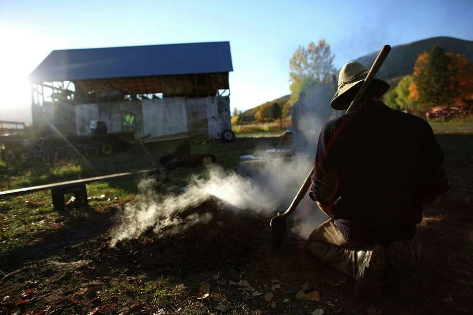 A farmer digs up a goat that was cooked in a pit for a post-harvest celebration at the Channing Family Farm in Washington State. The mule-powered, organic farm produces certified organic garlic and potatoes. Photo: JOSHUA TRUJILLO, SEATTLEPI.COM / SEATTLEPI.COM