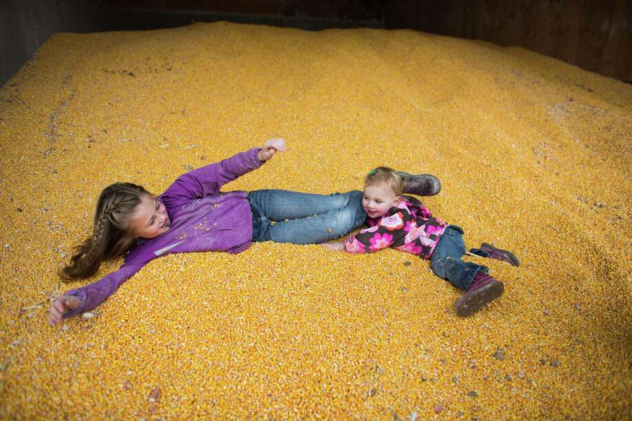 Tabby DeJong, 8, has fun with her sister Mieke, 2, in a large bin of corn used as feed for the cows on the DeJong family's diary, Eaglemill Farms.  Photo: JOSHUA TRUJILLO, SEATTLEPI.COM / SEATTLEPI.COM