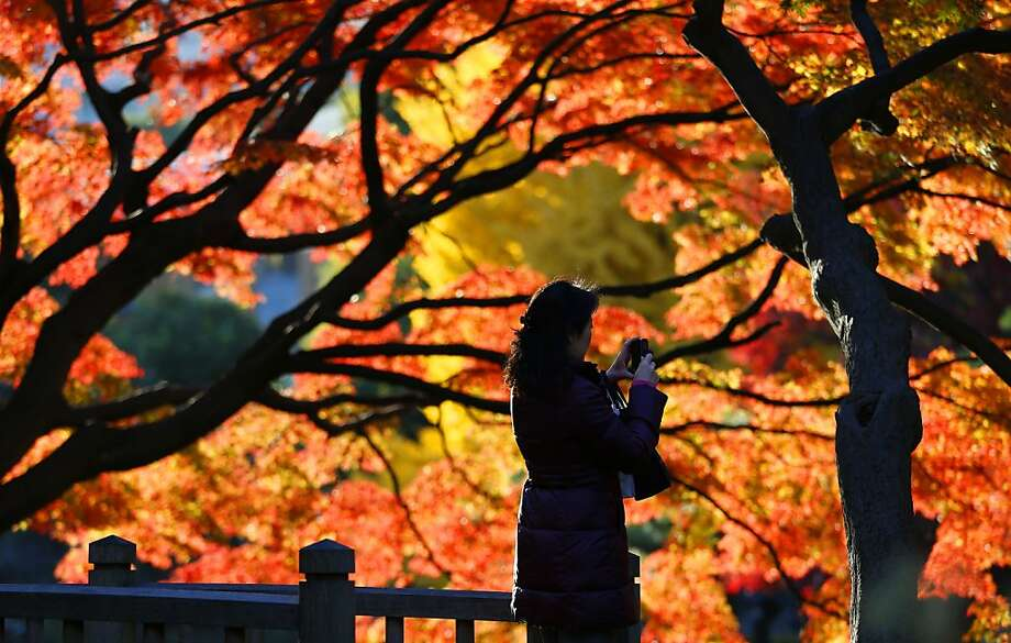 Fall color comes lateto Hibiya Park in Tokyo. Photo: Shizuo Kambayashi, Associated Press