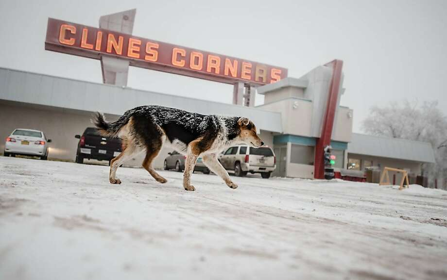 """The king of Clines Corners:A dog dubbed Roy Clines rules the snowy parking lot outside the busy Clines Corners travel center east of Albuquerque, N.M. Clines Corners manager Jeff Andreson says the pooch """"just showed up one day about a month ago,"""" presumably abandoned by a traveler. Roy, named after the founder of the restaurant/convenience store on Interstate 40 (previously Route 66), seems to like living at the roadside stop, where he's well-fed by both employees and customers. Photo: Roberto Rosales, Associated Press"""