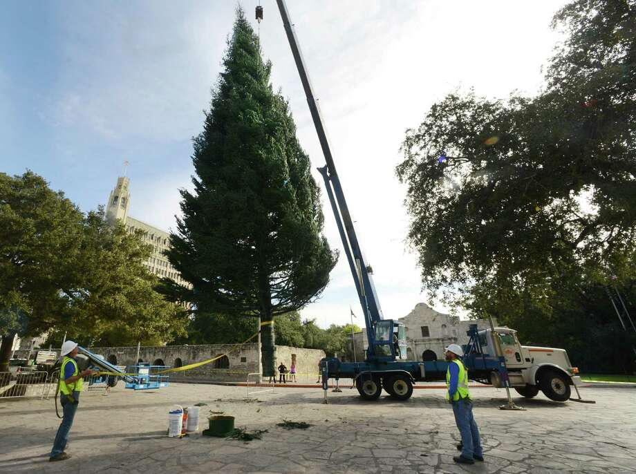 The city's Christmas tree, a 55-foot white fir donated by H-E-B, is raised in Alamo Plaza on Nov. 19.