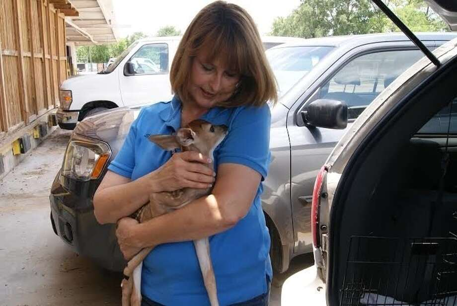 Sharon Schmalz has been rescuing orphaned or injured wild animals in the Houston area for 30 years.
