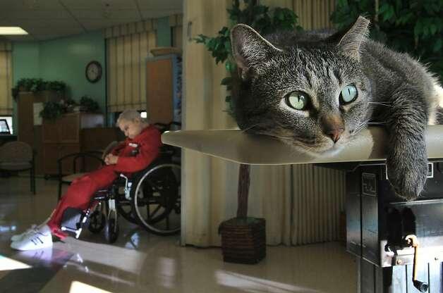 The Healing Cat