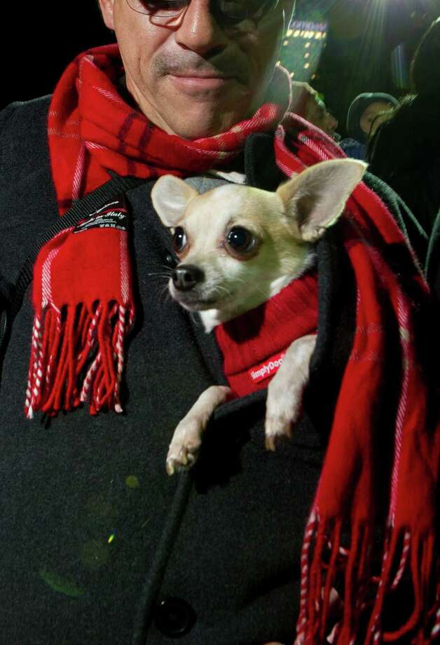 Jhon Arroyave, keeps his chihuahua Paco warm by wearing him in his coat during the 28th Annual Uptown Houston Holiday Lighting on the 2000 block of Post Oak Boulevard Thursday, Nov. 28, 2013, in Houston.  More than a half-million lights on 80 trees were lit on the tree-lined street along with festively lit balconies, buildings and rooftops. The evening event featured holiday music, performances, a fireworks display and a visit from Santa. ( Johnny Hanson / Houston Chronicle ) Photo: Johnny Hanson, Staff / Houston Chronicle