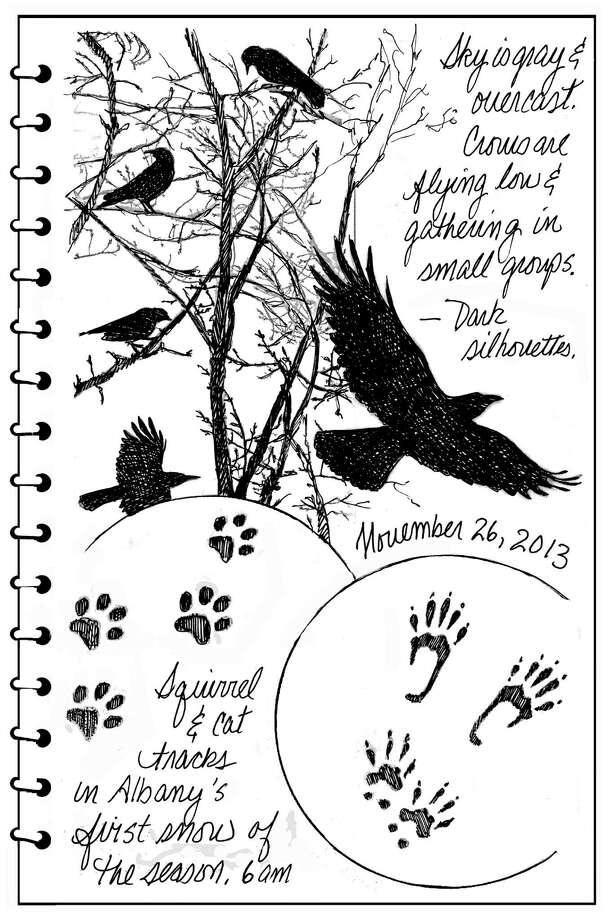 Backyard Naturalist for Dec. 1, 2013 Unwind. (Carol Coogan)