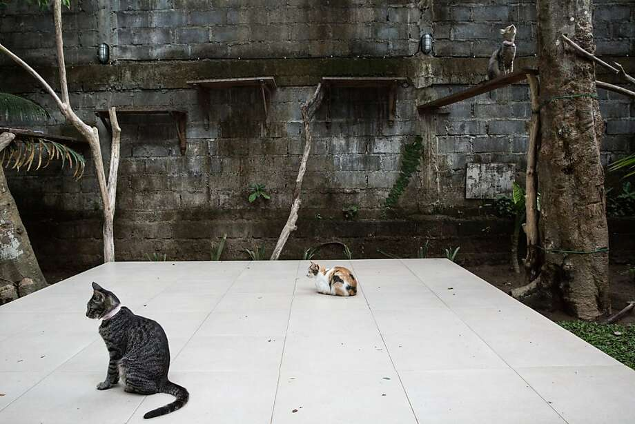 Cater-cornered kitties:At Villa Kitty shelter in Ubud, Bali, cats waiting to be adopted have ample room for exploring, lounging around and, in the case of the feline at right, pursuing birdies. Photo: Putu Sayoga, Getty Images