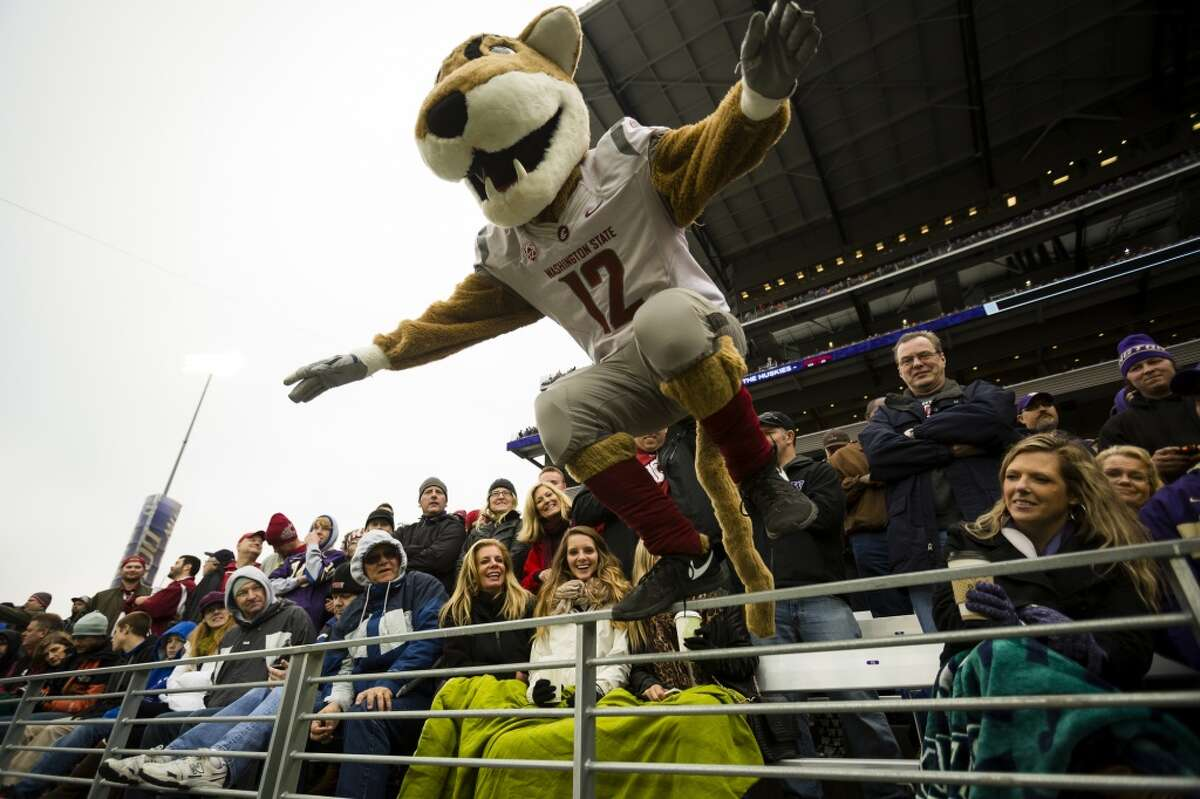 WSU mascot Butch T. Cougar jumps onto the field after giving a round of high fives to fans during the 106th annual Apple Cup Friday, Nov. 29, 2013, at Husky Stadium in Seattle. The Huskies beat the Cougars 27-17. (Jordan Stead, seattlepi.com)