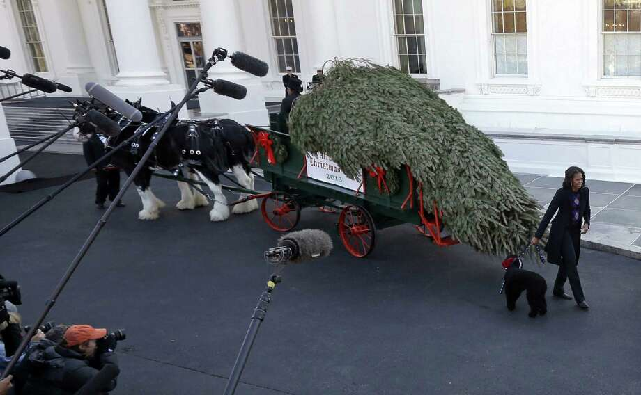 First lady Michelle Obama receives the official White House Christmas tree, which came from a Pennsylvania tree grower, outside the White House. Photo: Pablo Martinez Monsivais / Associated Press