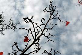 Few leaves are left on a tree on State St. in Los Altos, Calif., on Wednesday, November 27, 2013.