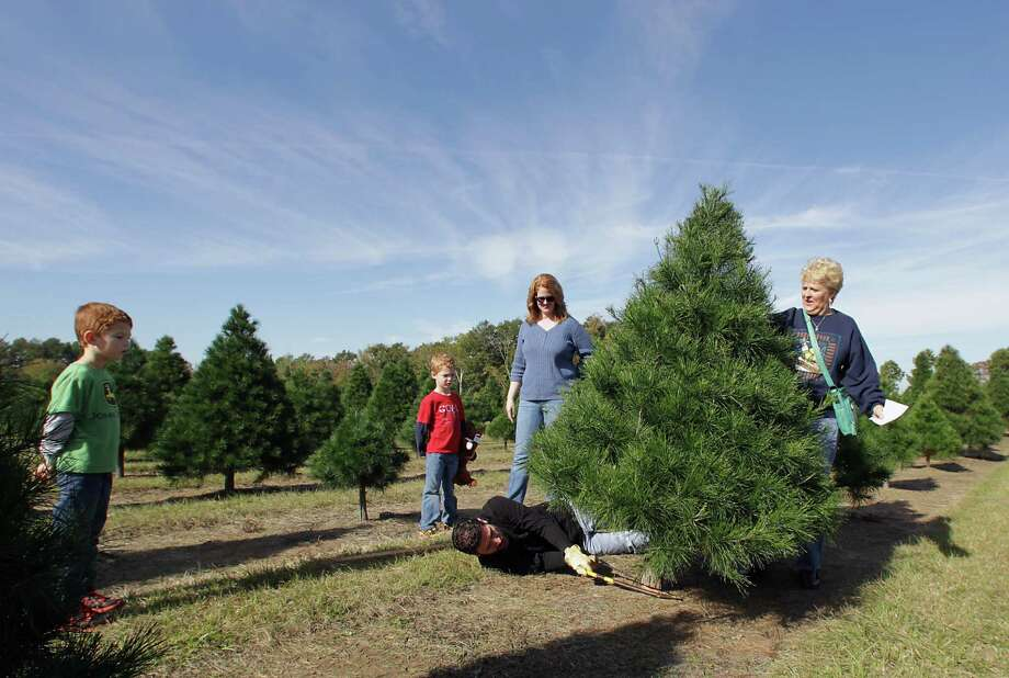 The Ross family cuts down their Christmas tree at Old Time Christmas Tree Farm Saturday, Nov. 30, 2013, in Spring. Photo: James Nielsen, Houston Chronicle / © 2013  Houston Chronicle