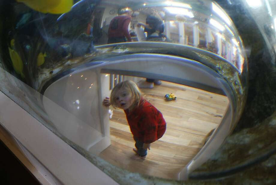 Emily Klas, 2, eyes the fish tank at Bumble, one of several new attractions in Los Altos. Photo: Liz Hafalia, Chronicle