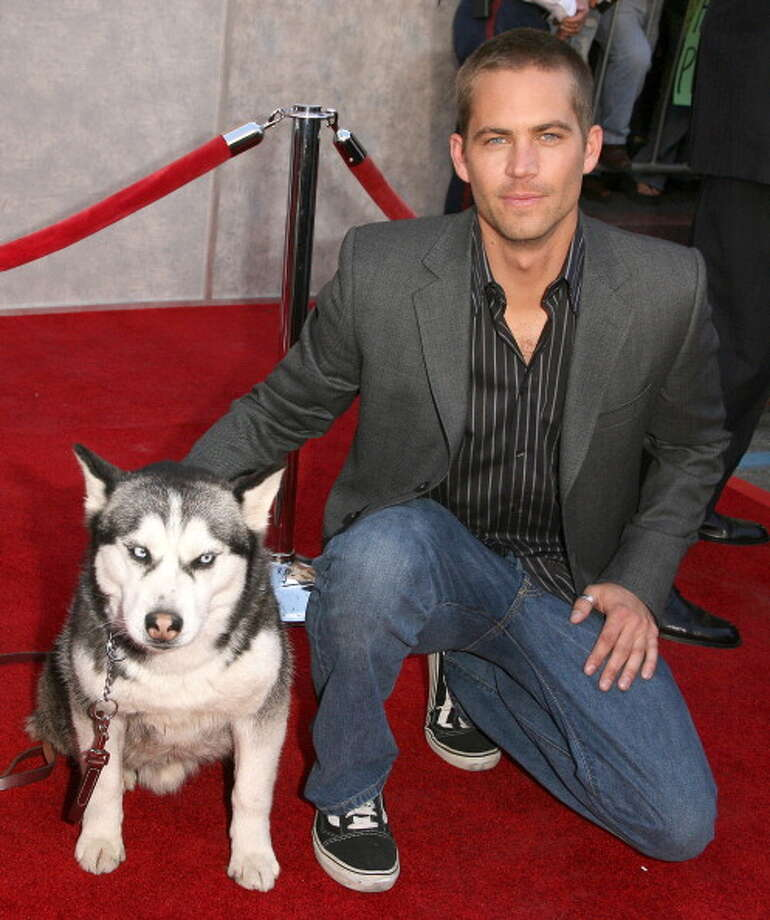 "Paul Walker during ""Eight Below"" Los Angeles Premiere - Arrivals at El Capitan in Hollywood, California, United States. (Photo by Jason Merritt/FilmMagic) Photo: Jason Merritt, FilmMagic / FilmMagic"