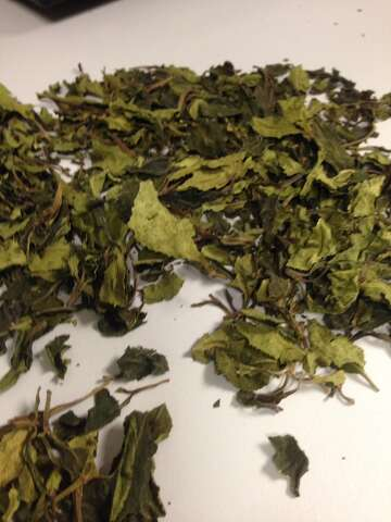 Drug raids target African plant 'khat' - HoustonChronicle com