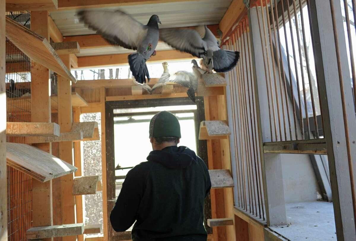Shokri Enbawe who grew up in Palestine, walks in one of his pigeon coops at his home on Friday, Nov. 29, 2013 in Albany, N.Y. Enbawe uses the birds for pigeon racing. (Lori Van Buren / Times Union) .