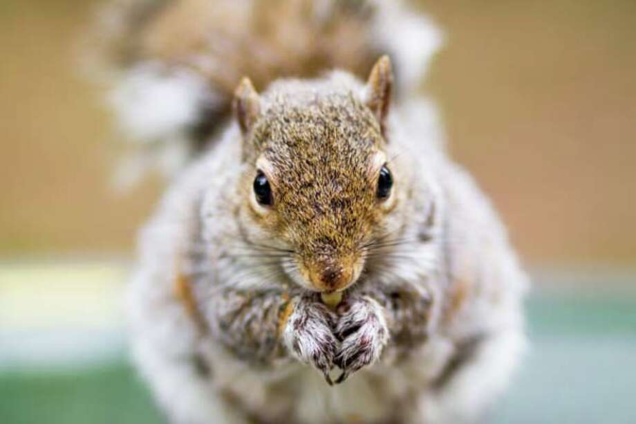 Find your inner squirrel and go nuts! No, really. By eating a little at home before you head to the party, you'll help to keep from ravaging the food spread. Nuts, eggs, and string cheese are good ideas. Photo: AlexTurton, Getty Images/Flickr RF / Flickr RF