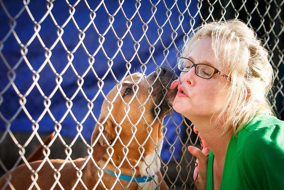 A good boy who needs a home soon:Cullen, a pit bull mix, kisses volunteer Jennifer Maxwell through a chain-link fence at the Brazoria County Humane Society in Manvel, Texas. The animal shelter is being forced to close due to an illness by the owner and   a lack of volunteers. Photo: Michael Paulsen, Houston Chronicle