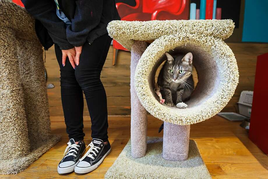 Tabby in a tunnel: Volunteer Laura Byerly, 16, tries to play with 2-year-old Madonna, but the shy kitty won't come out of the Carpeted Tube of Solitude at Houston SPCA Holiday Windows of Life pet adoptions at Neiman Marcus Galleria. Photo: Michael Paulsen, Houston Chronicle