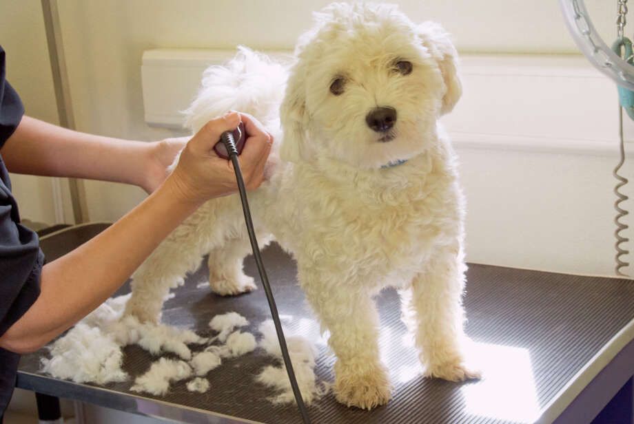 4. Love animals? You're in demand. Animal groomers, trainers and cleaners belong to a field that's growing by 3.2 percent a year.  Photo: Bill Holden, Getty Images / Cultura RF