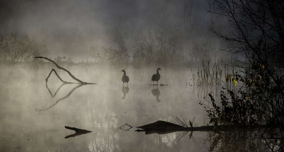 Eric Roberts took this photo of geese in Gloversville on his way to work one morning in October.