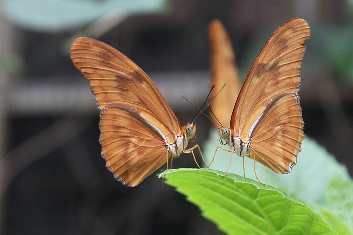 Richard Ruotolo of Troy took this photo of two butterflies.