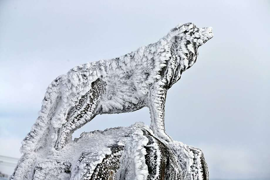 The rime dog: In Oberwiesenthal, Germany, windblown snow leaves a wooden canine covered with tufts of ice. Photo: Jan Woitas, AFP/Getty Images