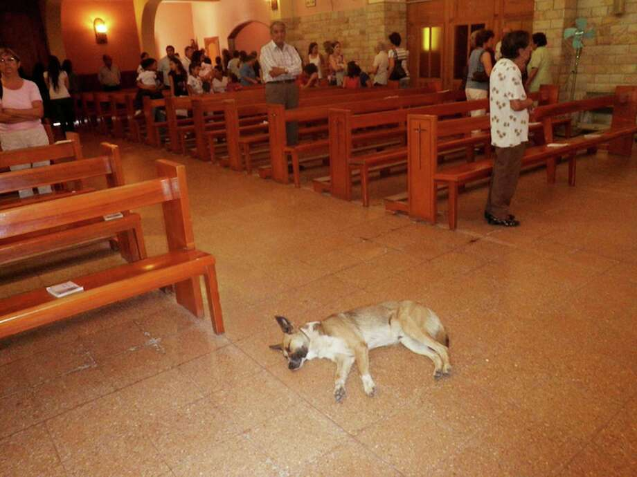 "During a trip to Argentina, Beth Dolinar had a strange experience. Whille attending mass in a small local church, she watched as a dog made its way up to the altar and plopped down on the church's floor. ""People lined up to receive the host and then stepped around the dog as they returned to their pews,"" Dolinar says. ""The dog slept through it all, having found a cool patch of floor."" Photo: Contributed Photo / Greenwich Citizen"