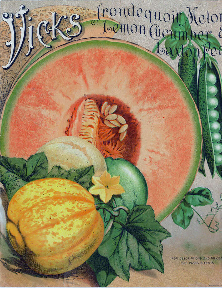 Before Vicks sold VapoRub, cough drops and NyQuil, they sold seeds through a catalog. Photo: Transcendental Graphics, Getty Images / 1890 Transcendental Graphics