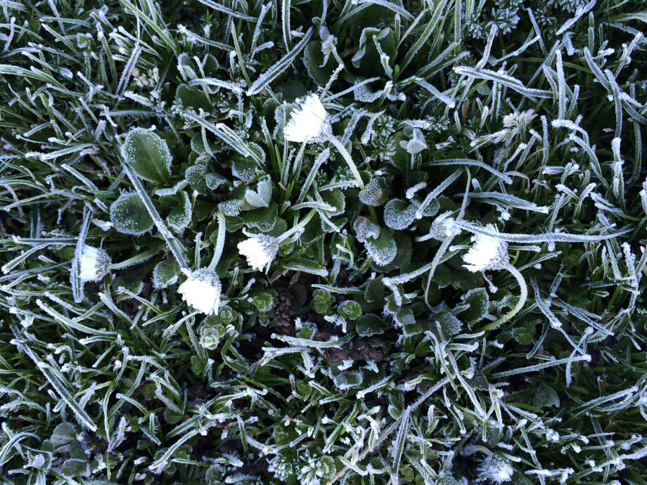 Jodi Fleischman provided these photos frost on the grass in Golden Gate Park on Thursday morning.  The Bay Area will have showers and possibly snowflakes in the air today.  Photo: Courtesy Of Jodi Fleischman