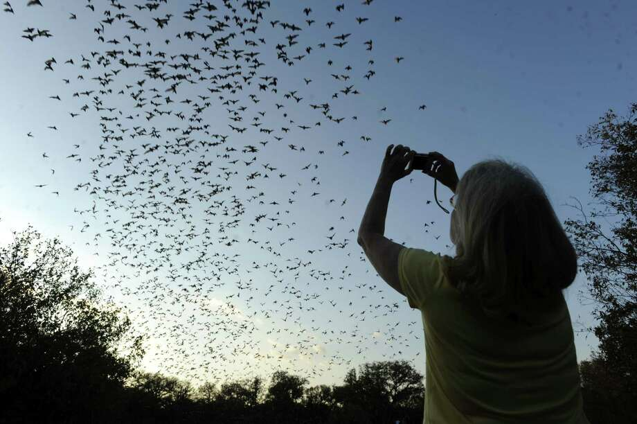 A  woman watches millions of Mexican free-tailed bats fly into the night from the Bracken Bat Cave. Efforts to protect the bat colony from encroaching development continue. Photo: Express-News File Photo