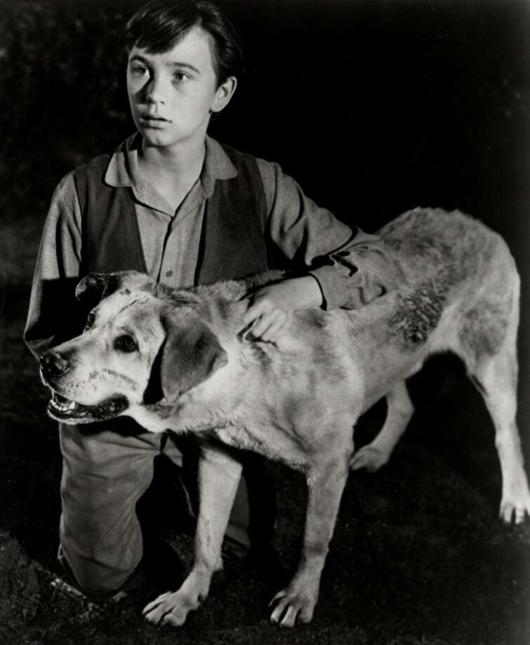 Movie 'Old Yeller' released on Christmas Day Photo: NBC Photo