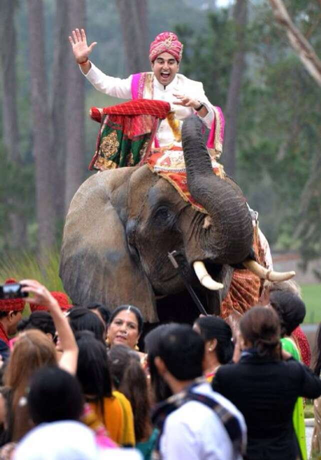 Friends and family greet Deepak Dugar as he arrvies via elephant to his wedding. Photo: None