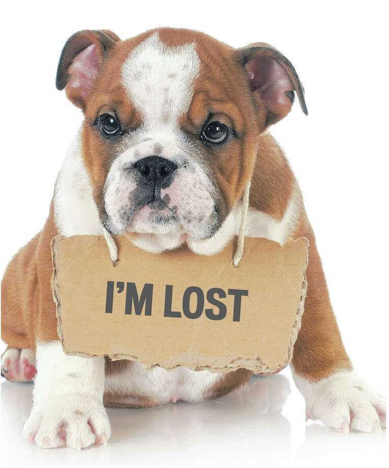 Lost pet. (Fotolia)