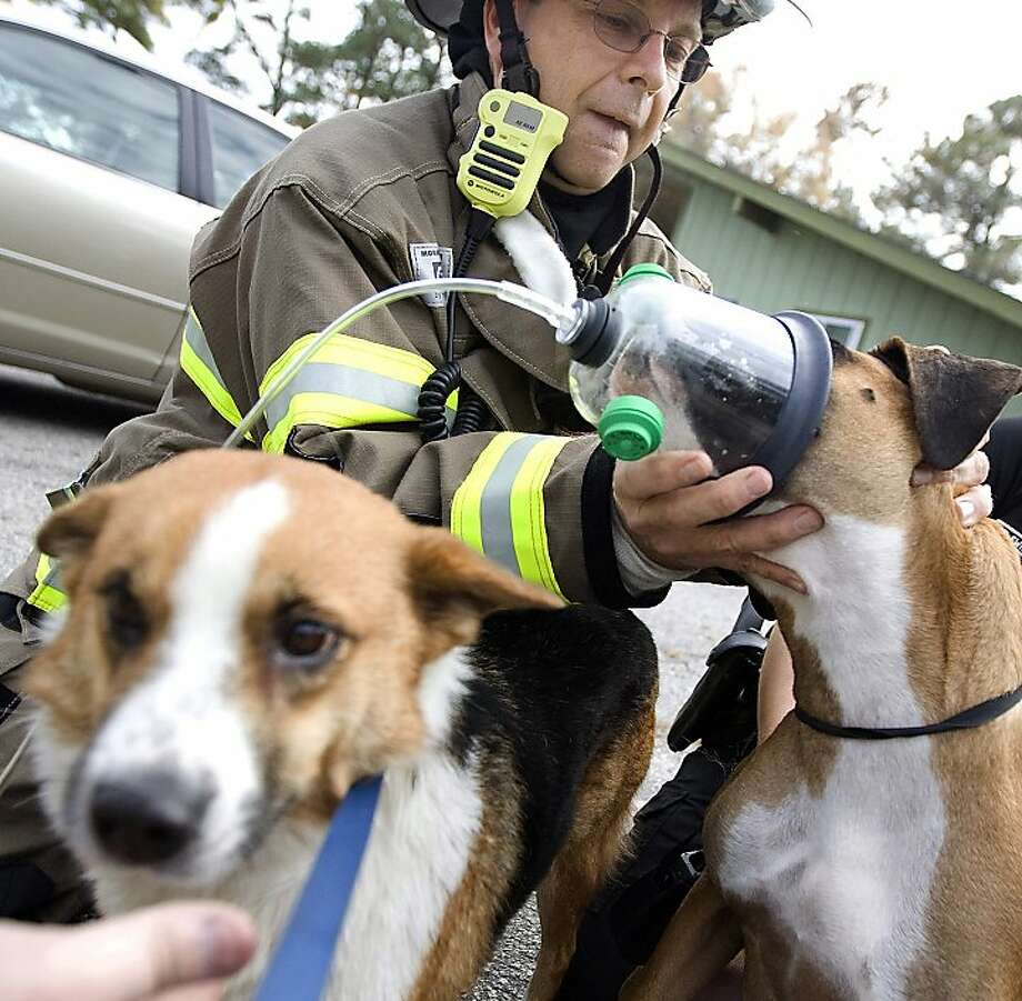 Rescued and revived:Engineer Steven Marinaro gives Stumpy oxygen through a mask after the pooch, Fur Ball (foreground) and a bird were rescued from a burning apartment in Myrtle Beach, S.C. None of animals was injured, but the dogs seemed to benefit from the oxygen. Photo: Janet Blackmon Morgan, Associated Press
