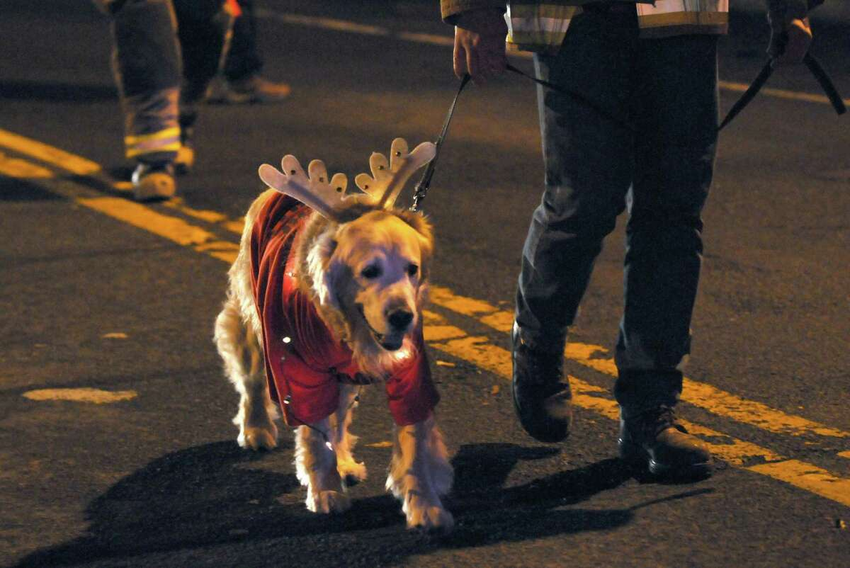 Max the Elsmere Fire Department dog marches in the Town of Bethlehem Holiday Parade on Friday Dec. 6, 2013 in Delmar, N.Y. (Michael P. Farrell/Times Union)