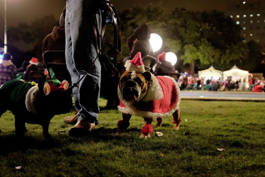 A French bulldog named Louie, left, and Gabby the bulldog join the party at the 94th annual Mayor's Holiday Celebration on Friday at Hermann Square. Photo: © TODD SPOTH,  2013 / © TODD SPOTH, 2013