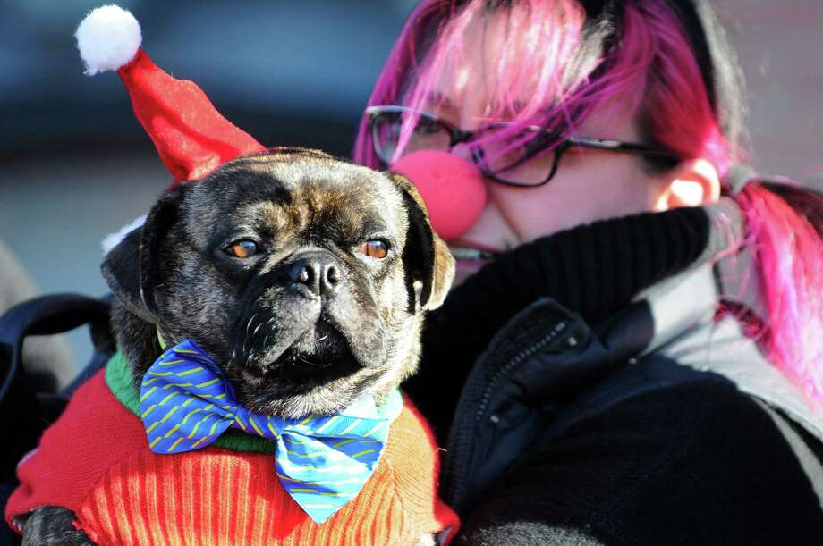 Nicole Karas of Albany and her pug, named David Lee Roth, dress up to watch the Santa Speedo Sprint on Saturday, Dec. 7, 2013, in Albany, N.Y. (Cindy Schultz / Times Union) Photo: Cindy Schultz / 00024885A