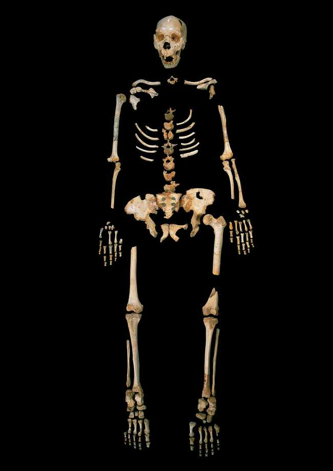 This undated photo provided by Madrid Scientific Films in December 2013 shows the skeleton of a hominin estimated to be about 400,000-years-old, excavated from Sima de los Huesos, Spain. Scientists have reached farther back than ever into the ancestry of humans to recover and analyze DNA, with a sample from bones from the site in northern Spain. So far, the achievement has provided more questions than answers about the human family tree. Results were presented online Wednesday, Dec. 4, 2013 in the journal Nature by Matthias Meyer and colleagues at the Max Planck Institute for Evolutionary Anthropology in Leipzig, Germany, with co-authors in Spain and China. Photo: Javier Trueba, AP / AP2013