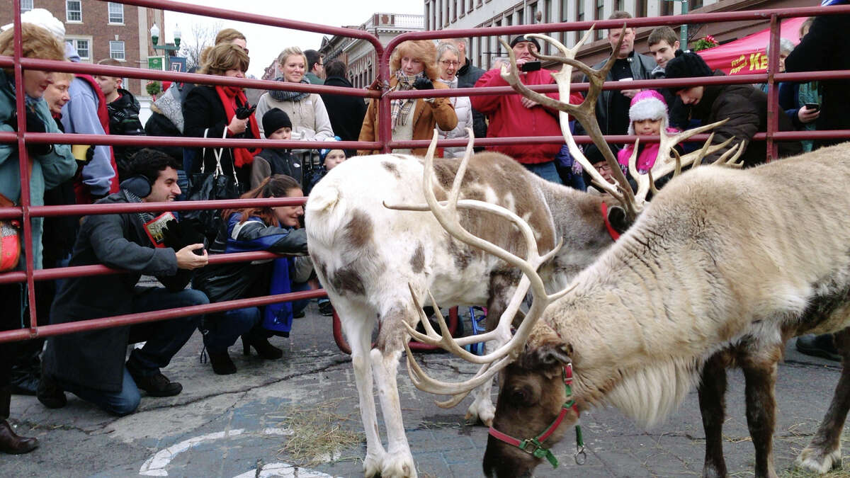 Adults and children gather around a pen of reindeer to take photographs and to pet them at the Troy Victorian Stroll on Sunday, Dec. 8, 2013 in downtown Troy, NY. (Paul Buckowski / Times Union)