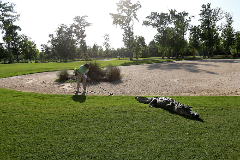 A worker grooms away tracks after an alligator crossed through a sand trap on the 14th hole during the first round of the PGA Tour Zurich Classic golf tournament at TPC Louisiana in Avondale, La., Thursday, April 25, 2013. Photo: Gerald Herbert, ASSOCIATED PRESS / AP2013