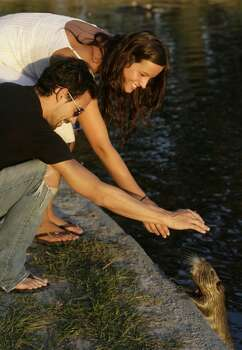 Kevin Hernandez and Kortnie Coles play with a nutria at Hermann Park on in October 2008. Photo: Julio Cortez, Houston Chronicle
