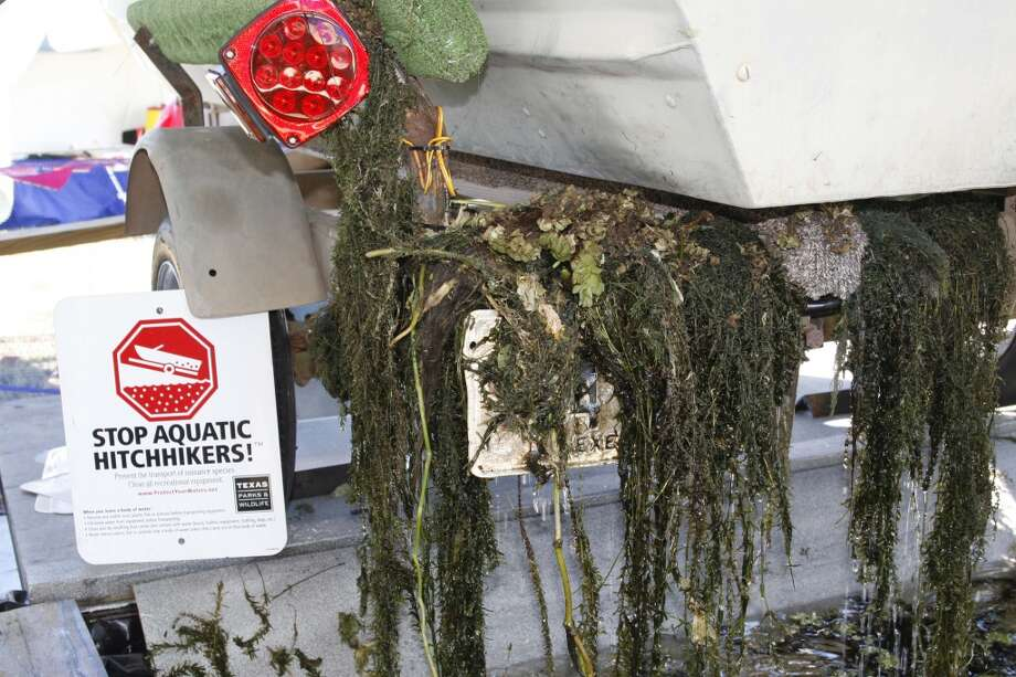 Officials say boaters have spread harmful aquatic plants across much of eastern Texas by letting them hitch rides on trailers. Photo: Shannon Tompkins, Houston Chronicle