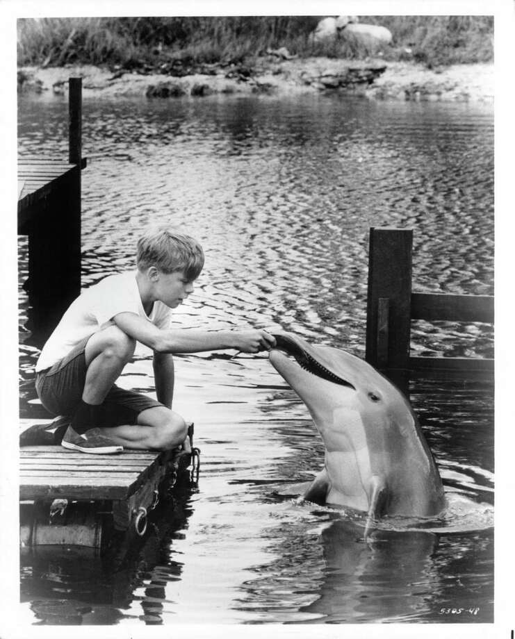 "Luke Halpin plays with his pet dolphin in a scene from the television series ""Flipper,"" 1964. Photo: Archive Photos, Getty Images / 2012 Getty Images"