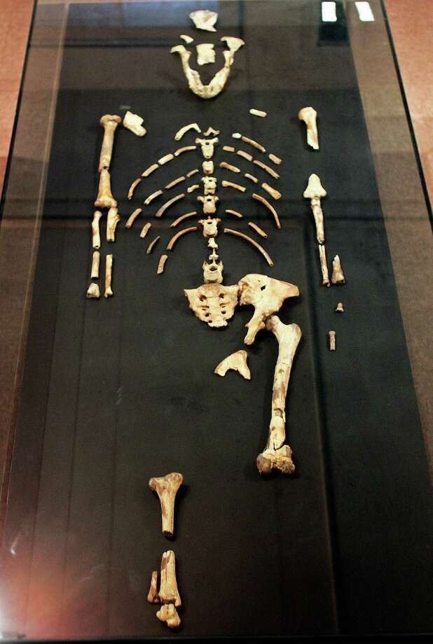 """Lucy,"" a 3.2 million year-old fossil of an early human species, was discovered in 1974 in Ethiopia's Harar region. With 40 percent of her skeleton recovered, she is the oldest, most complete specimen of an early human species, standing about 3 feet, 6 inches tall and weighing approximately 60 pounds. She is named Lucy after the well-known Beatles tune, which her discoverers were listening to the day she was found. Photo: AFP, Getty Images / 2013 AFP"