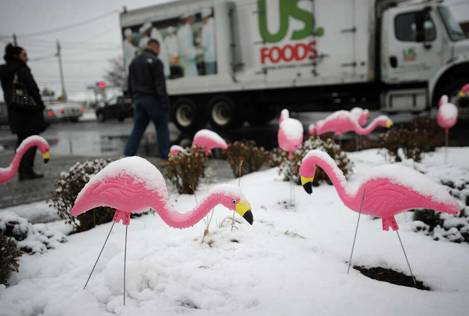 A flock of pink plastic lawn flamingos contrast with the wet morning snow on Main Street in Stratford, Conn. on Tuesday, December 10, 2013. Photo: Brian A. Pounds / Connecticut Post