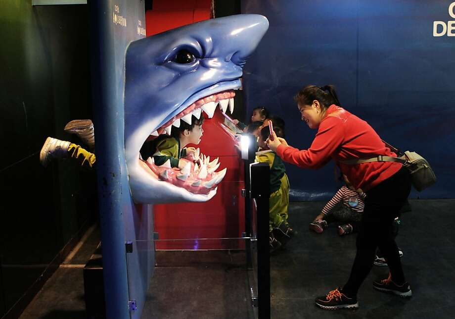 A class stops for a bite at the COEX Aquarium in Seoul, with a kindergartner serving as the main course. Photo: Ahn Young-joon, Associated Press